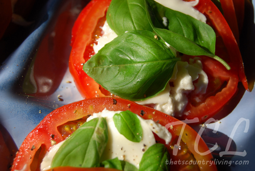 tomato basil mozzarella