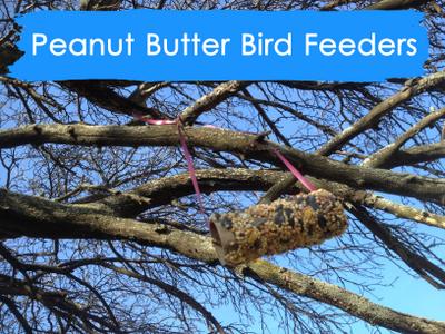 how to bird feeder