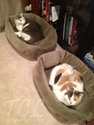 cats in beds