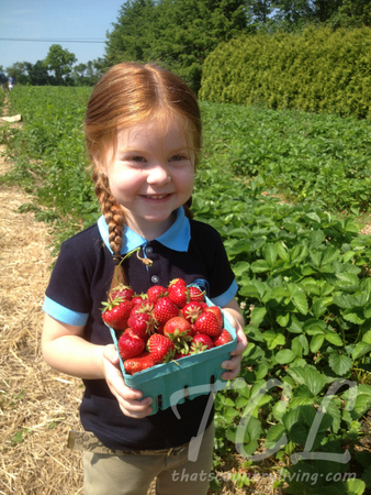 strawberry picking 1