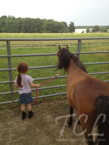 lily and pretzel pony