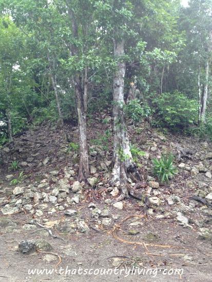Chacchoben Mayan Ruins Costa Maya i