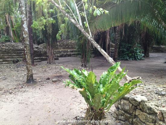 Chacchoben Mayan Ruins Costa Maya o