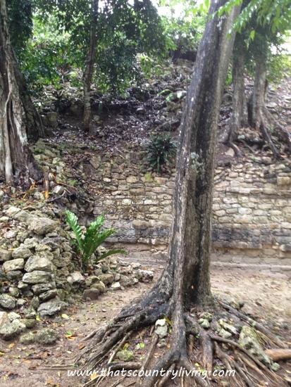 Chacchoben Mayan Ruins Costa Maya p