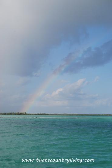 Passion Island a
