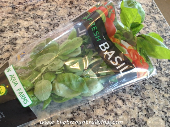 basil plant