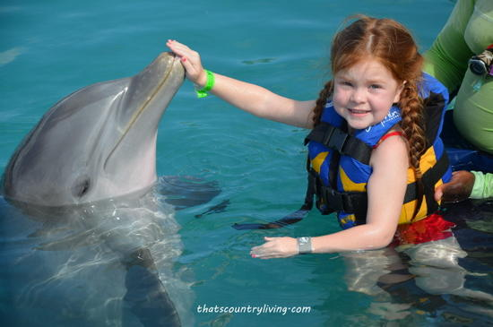 dolphin encounter grand cayman