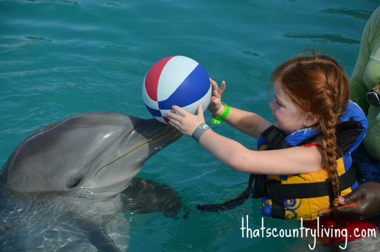 swimming with dolphins grand cayman